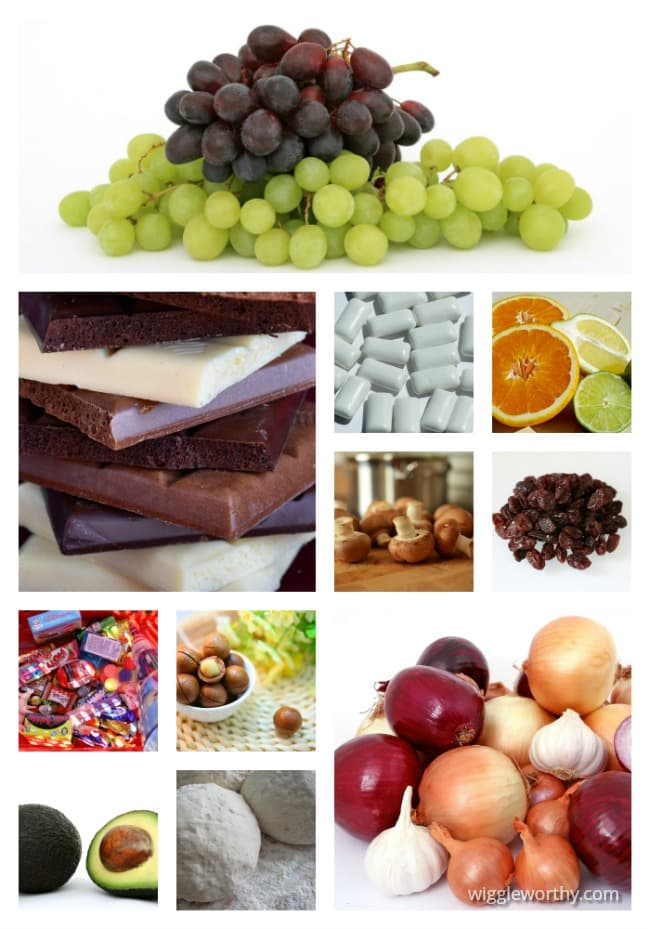 Collage of human foods which are poisonous to dogs