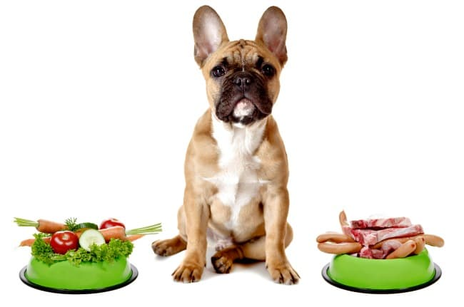 French Bulldog with one dog bowl filled with fresh vegetables and one filled with meat products