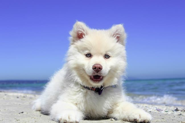 White puppy on the sand by the ocean